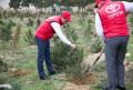 Компания «Toyota Кавказ» провела акцию по озеленению города